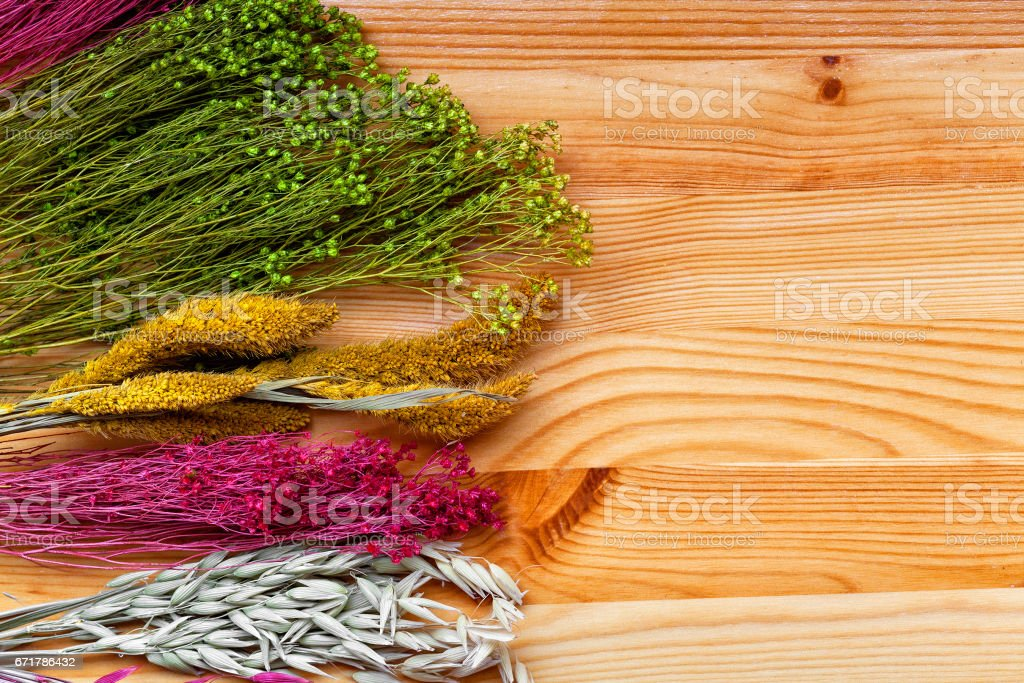 Background of a beautiful wild dried flowers close-up. dried...