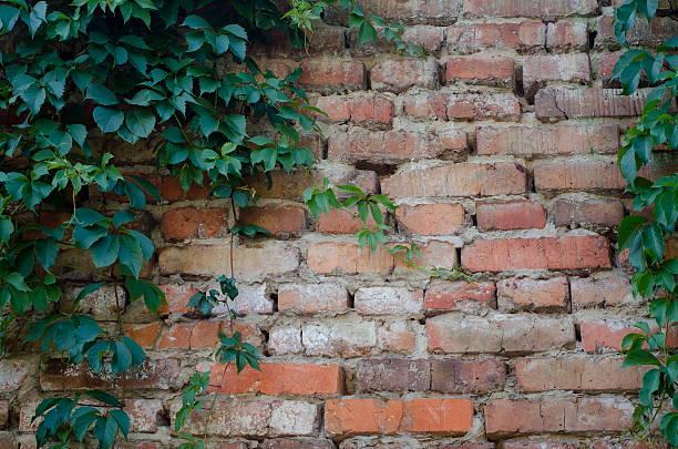 de fundo de um tijolo muro de pedra com hera verde folhas - ivy building imagens e fotografias de stock