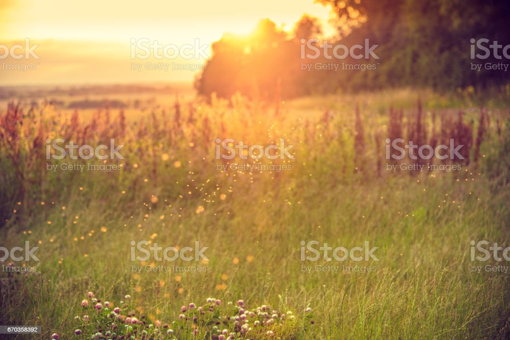 Background of a meadow in the afternoon stock photo