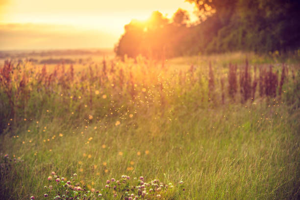 background of a meadow in the afternoon - meadow stock pictures, royalty-free photos & images