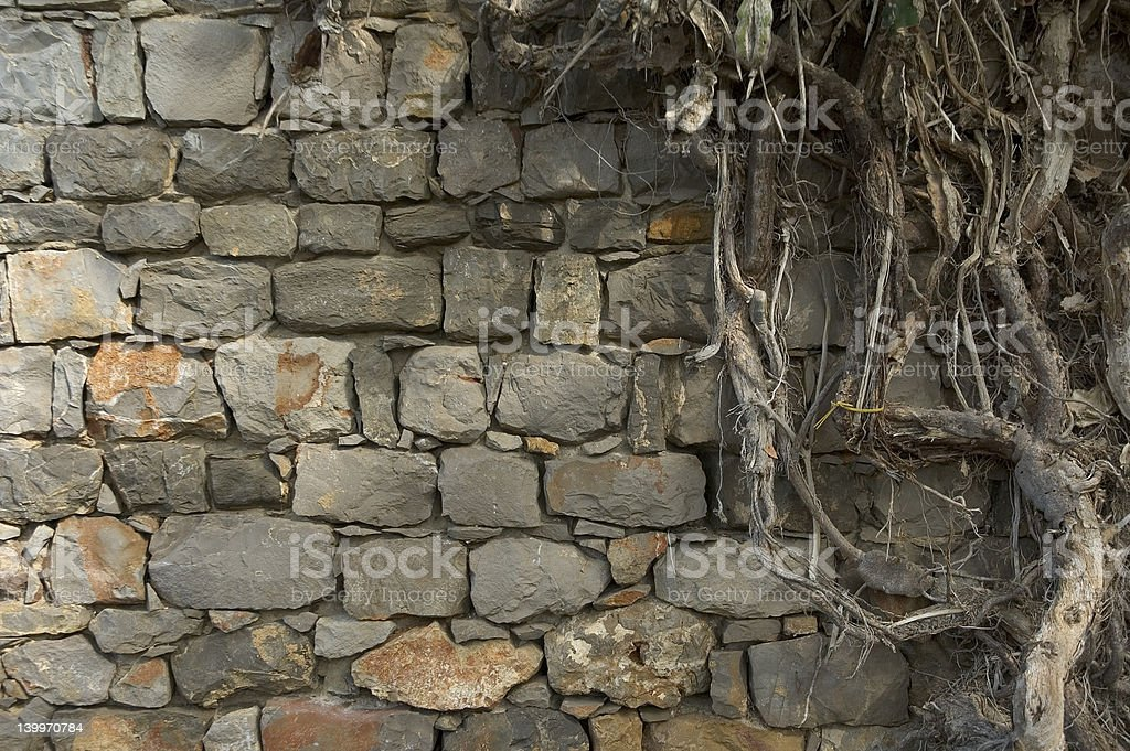 background of ancient wall and roots royalty-free stock photo