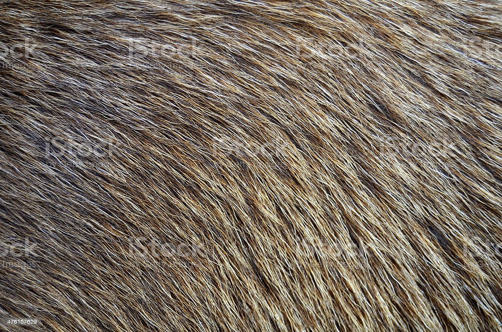 Background Of Animal Fur stock photo