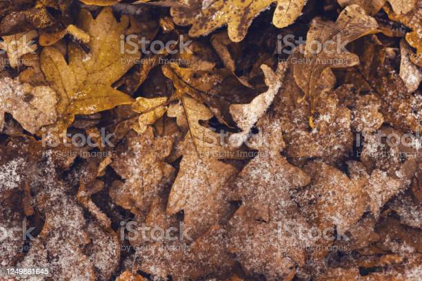 Photo of Background of autumn leaves under the snow
