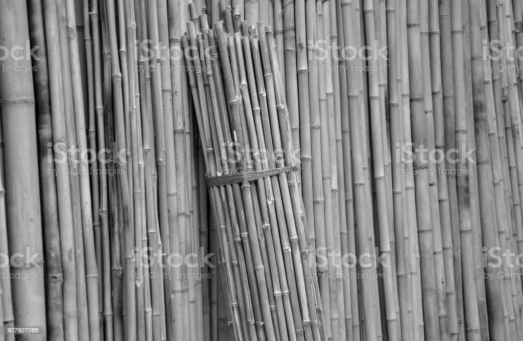 Background of bamboo in black and white colors stock photo