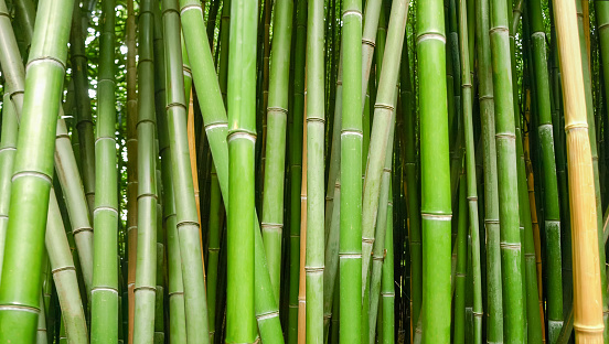 Background of bamboo stems, fragment in selective focus