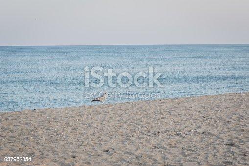 istock background of beach 637952354