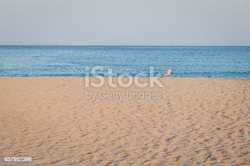 istock background of beach 637952398