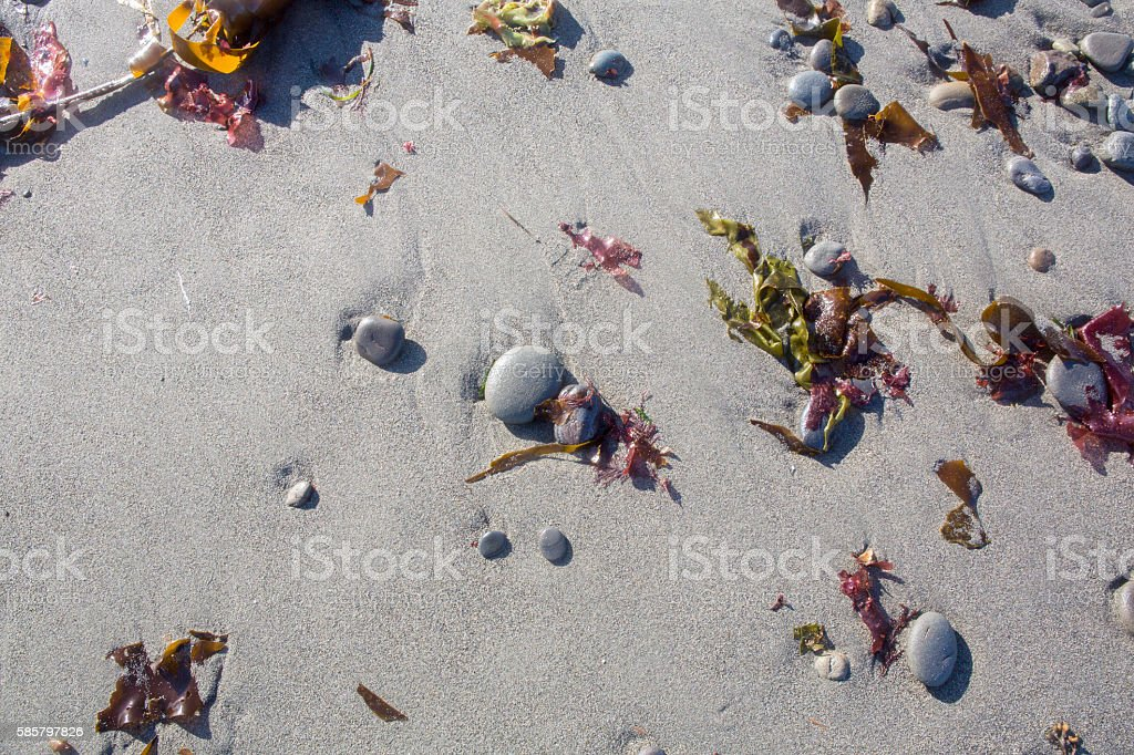 Background of beach with round stones and seaweed stock photo