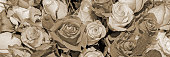 Background of beautiful flowers. Сlose up. Panorama.