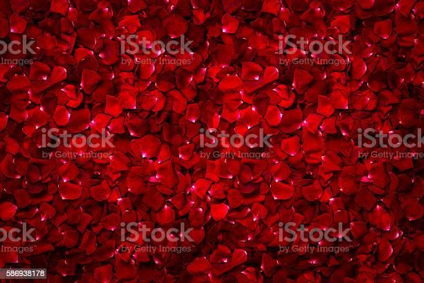 Background of beautiful red rose picture id586938178?b=1&k=6&m=586938178&s=612x612&h=5kfpitq cwe6qpshr8biwamvddorqncukjjiiduu93s=