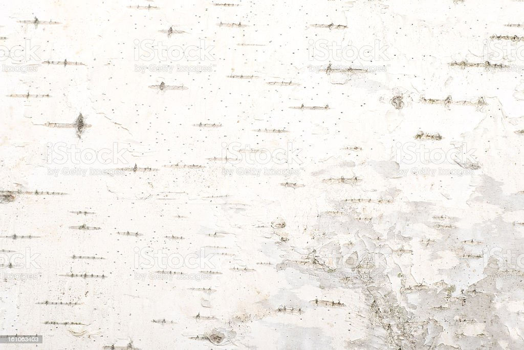 Background of birch bark texture stock photo