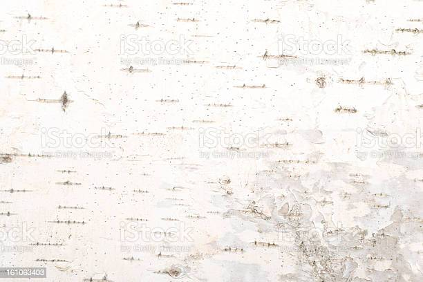 Background Of Birch Bark Texture Stock Photo - Download Image Now