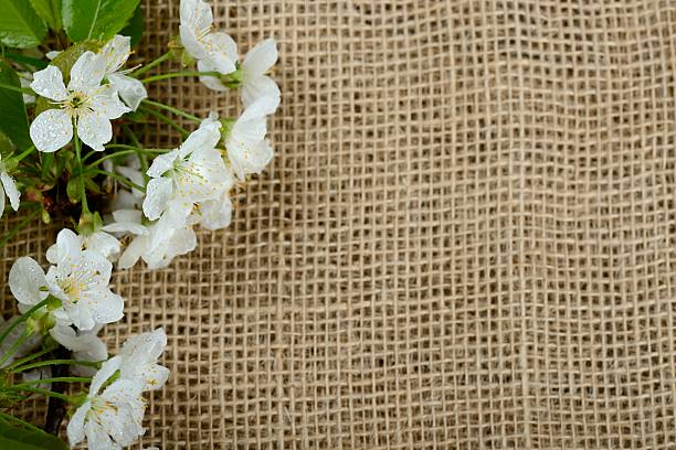 Background Of Burlap Hessian Sacking With Cherry Flowers Stock Photo High Resolution