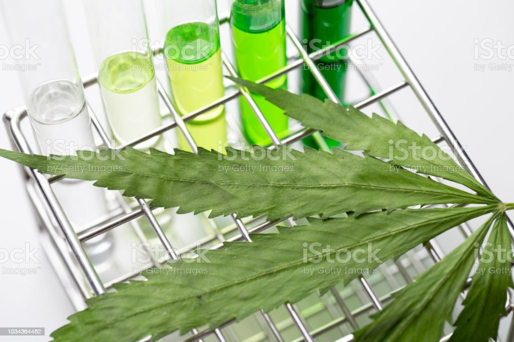 Background of Cannabis (Drugs), Analysis of Cannabis in laboratory. stock photo
