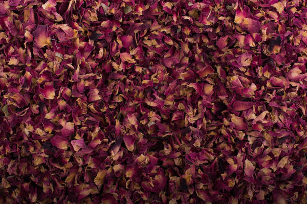Background of dried  rose petals stock photo