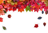 Background of fallen autumn leaves isolated on white background. Top view.