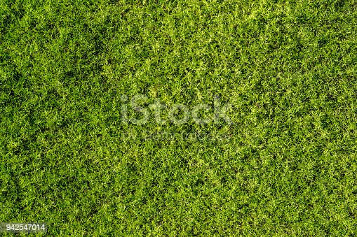 abstract background with a fine structure of green moss seen from above