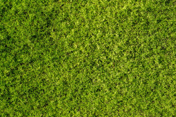 background of fine green moss, top view - moss stock pictures, royalty-free photos & images