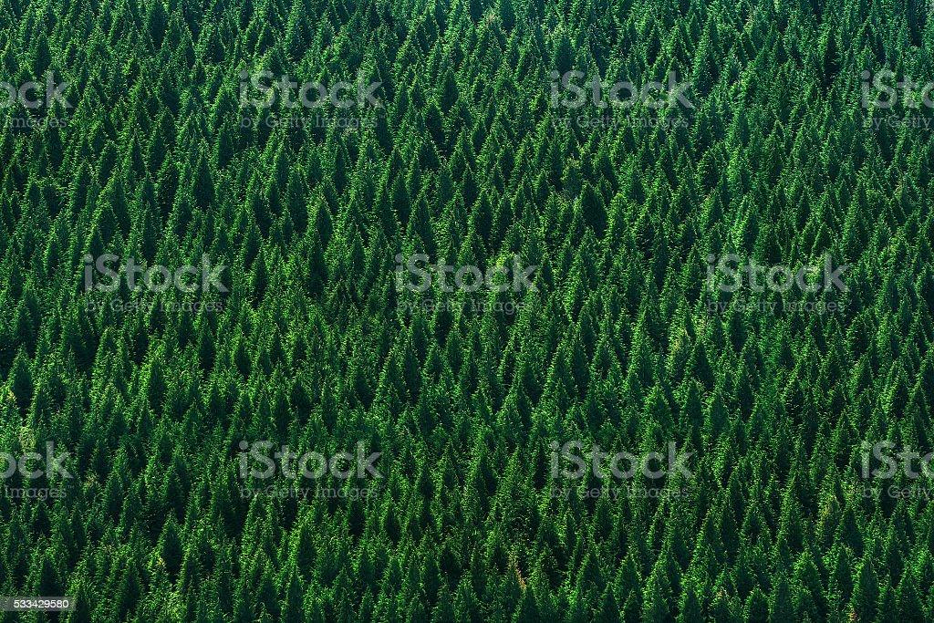 Fondo de bosque de árboles patrón - foto de stock