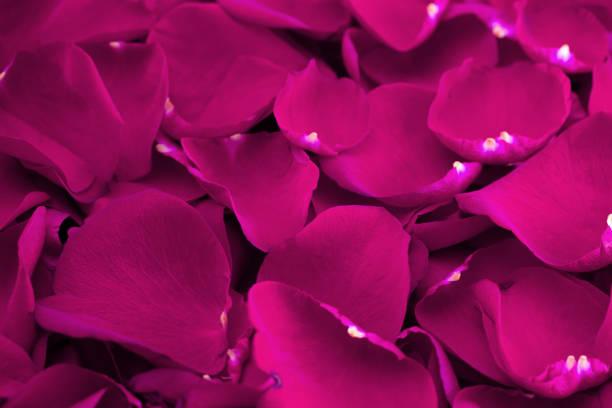 Background of fresh bright pink rose petals picture id1093719484?b=1&k=6&m=1093719484&s=612x612&w=0&h=ze0jhavnsepo07zos3xncebhv2mzt13ovmcuwnfi1uo=