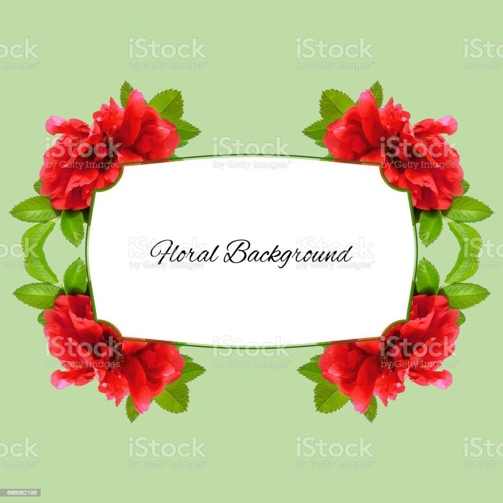 bakgrund av färska terry nypon blommor och plats för text royaltyfri bildbanksbilder