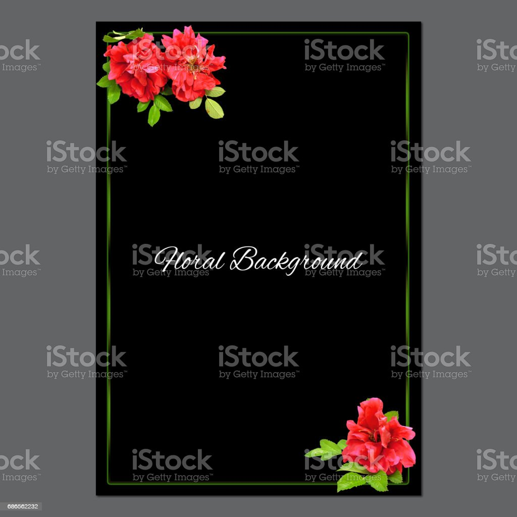 background of fresh terry rosehips  flowers  and place for text royalty-free stock photo