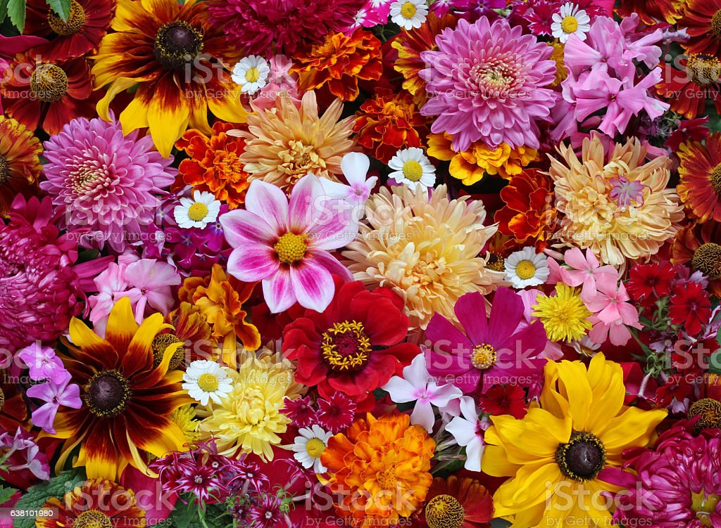 Background of garden flowers, top view. stock photo