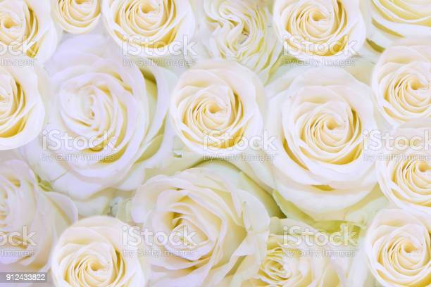 Background of gentle white flowers roses picture id912433822?b=1&k=6&m=912433822&s=612x612&h=fxlnyfcueyufork3kcrb5mxj zmaxesy4pzvefghnsa=