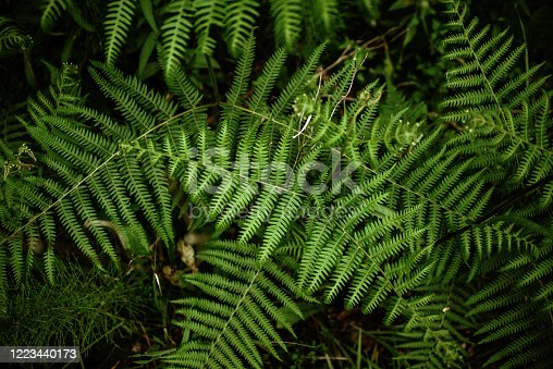 A background of small green leaves of ferns