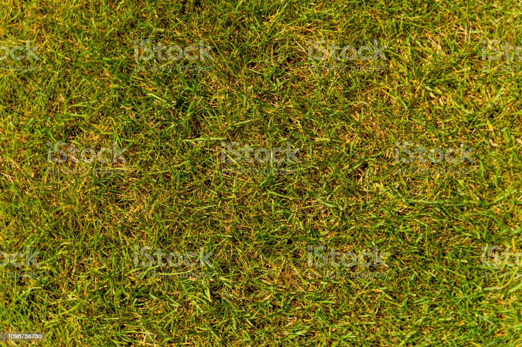 Background Of Green Grass Eco Concept Stock Photo - Download