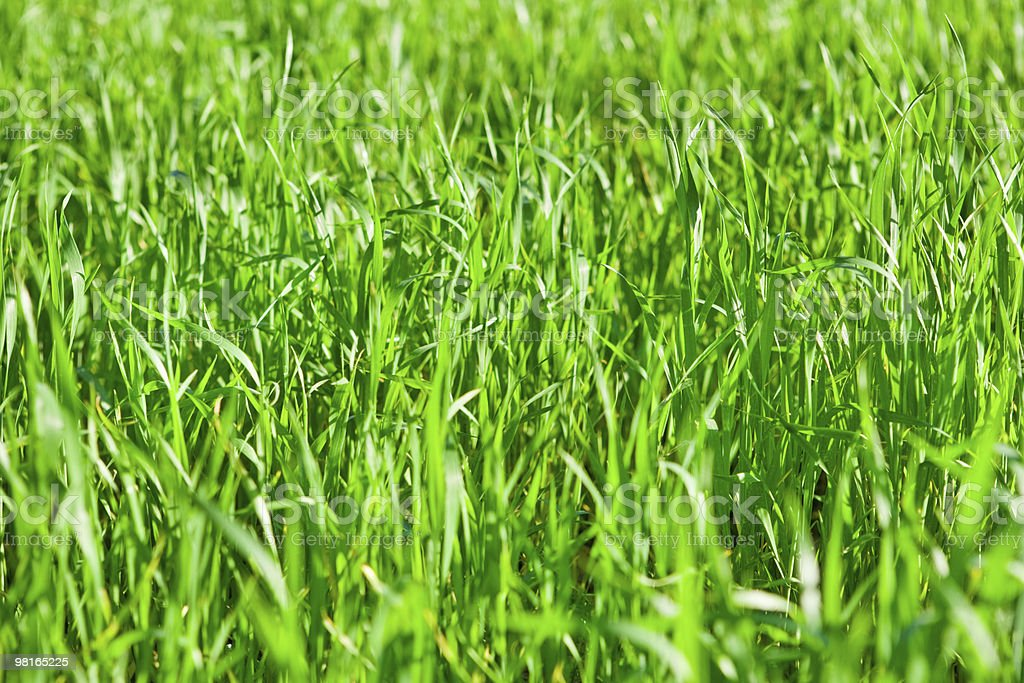 Background of green grass field royalty-free stock photo