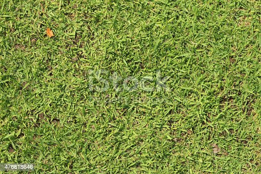 istock background of green grass in the park 476818646