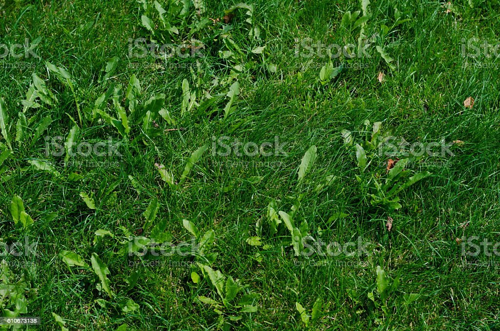 Background of green grass on a summer day stock photo