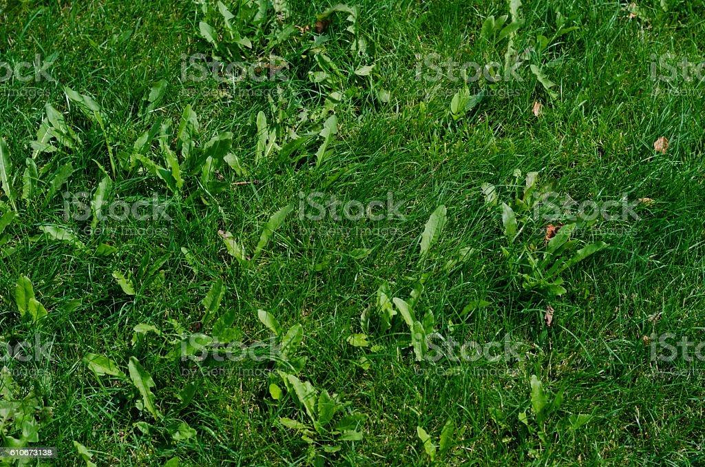 Background of green grass on a summer day - foto de acervo