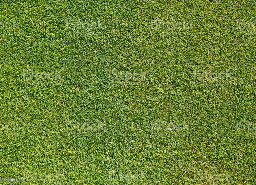 Background of Green Grass XXL stock photo