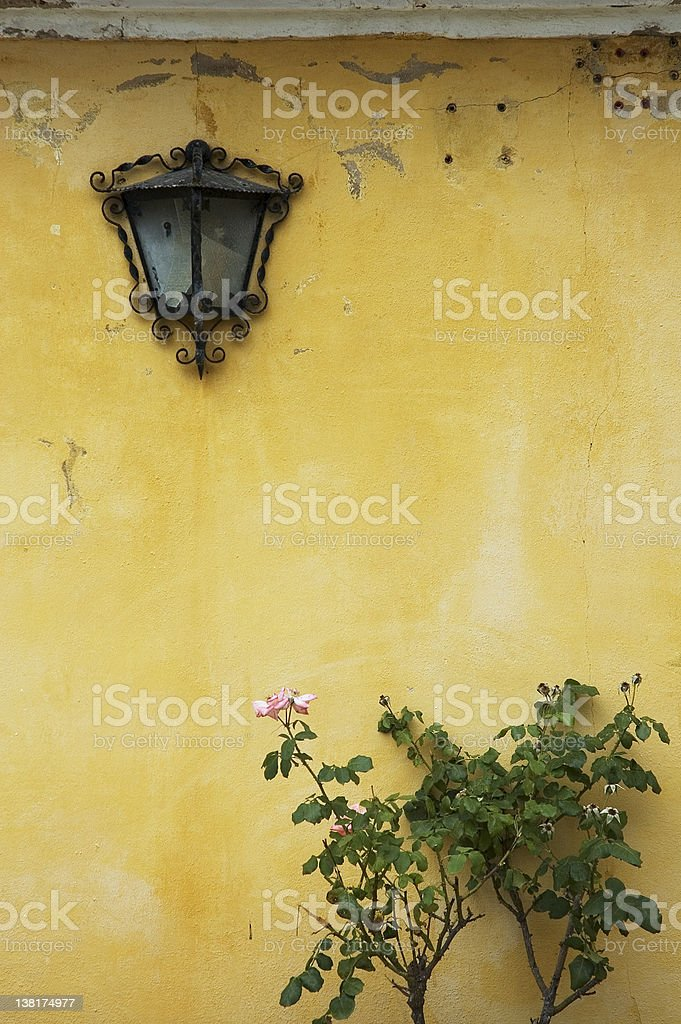 background of grunge wall, bush and lamp royalty-free stock photo