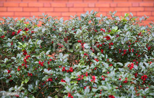brick wall and holly branches with fruits