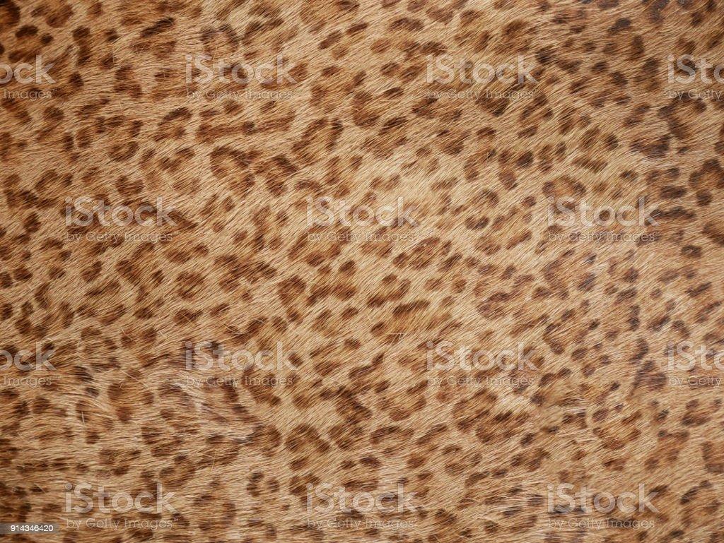 Background of Jaguar skin texture stock photo