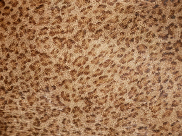 background of jaguar skin texture - tiger fur stock photos and pictures