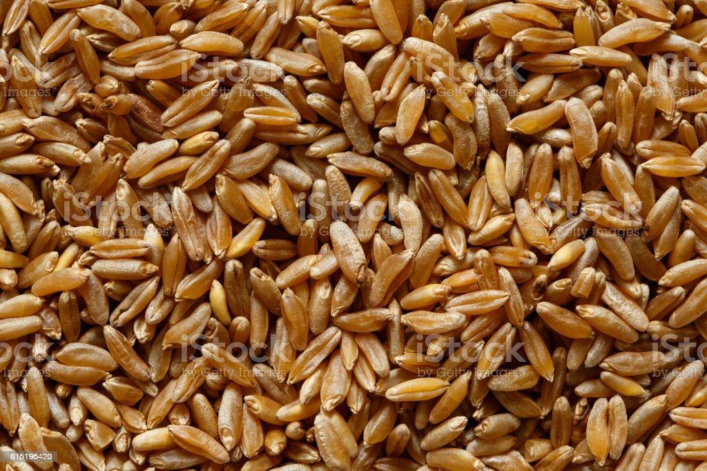 Background of kamut wheat kernels. stock photo