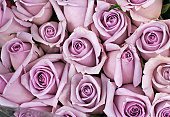istock Background of lavender colored roses 116655266