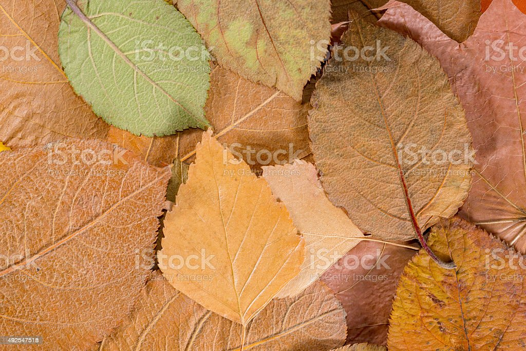 background of leaves stock photo
