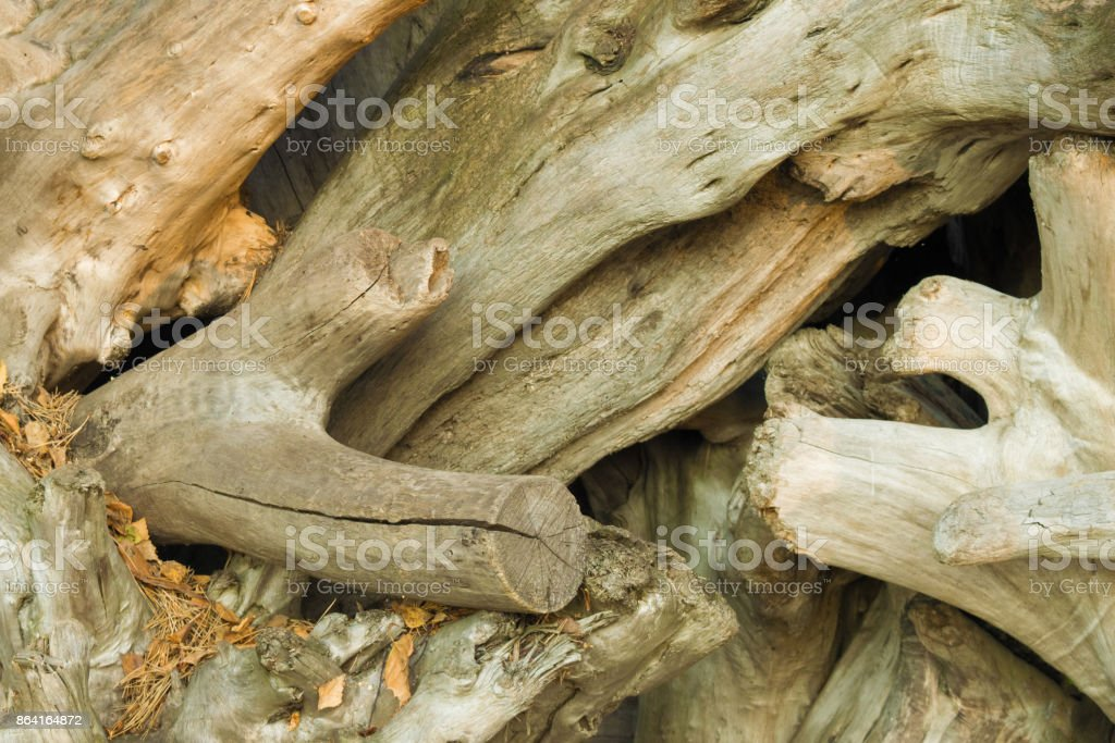 Background of many aged snags without bark. Large driftwood on each other. Close up royalty-free stock photo