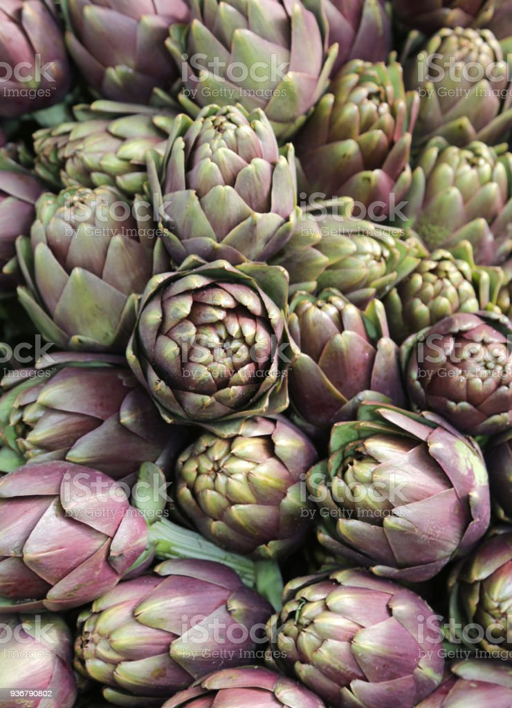 background of many ripe artichokes stock photo