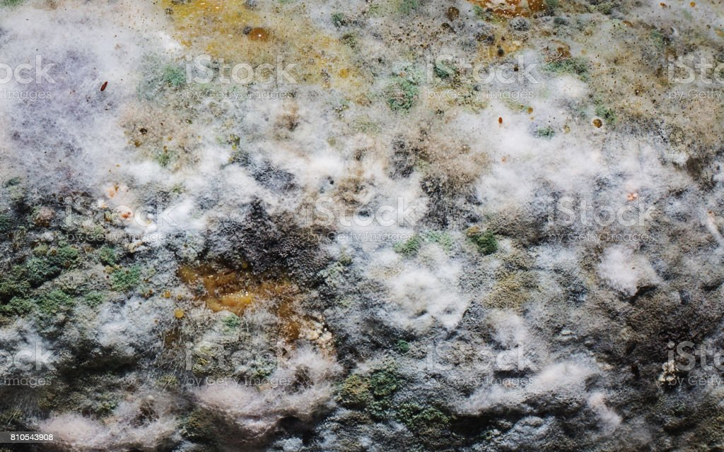 Background of mold stock photo