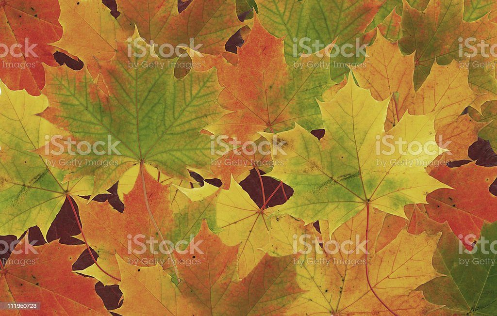 Background of multicolored fall leaves royalty-free stock photo