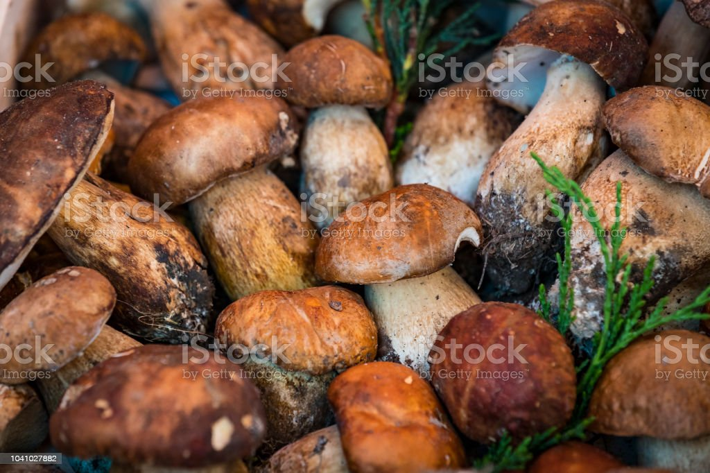 Background of mushrooms on the market in Milan stock photo