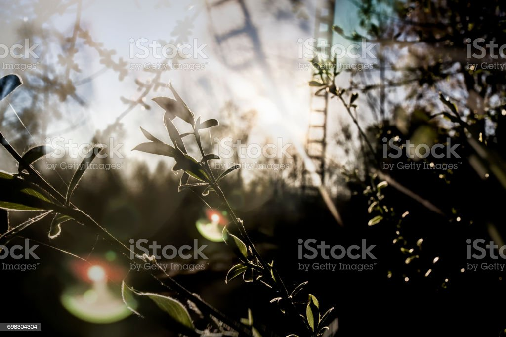 background of nature light stock photo