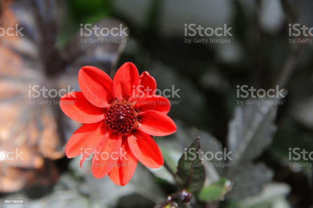 Achtergrond van oranje bloem - Royalty-free Bloem - Plant Stockfoto