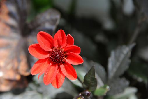 Achtergrond Van Oranje Bloem Stockfoto en meer beelden van Bloem - Plant